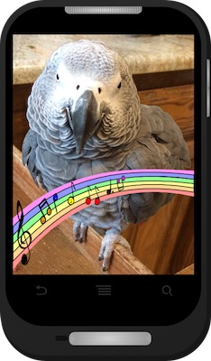Einstein's Ringtones | Einstein the Talking Texan Parrot